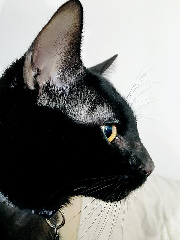 Layne the black cat